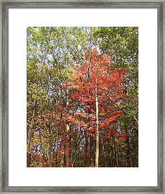 Framed Print featuring the photograph Beautiful Fall Colors  by Irina Sztukowski