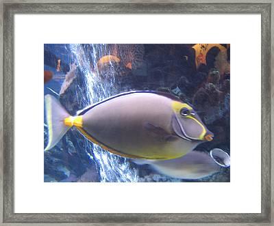 Beautiful Fish Framed Print by Suhas Tavkar