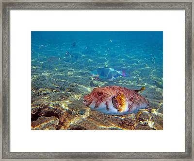 Beautiful Fish. Underwater World.  Framed Print by Andy Za