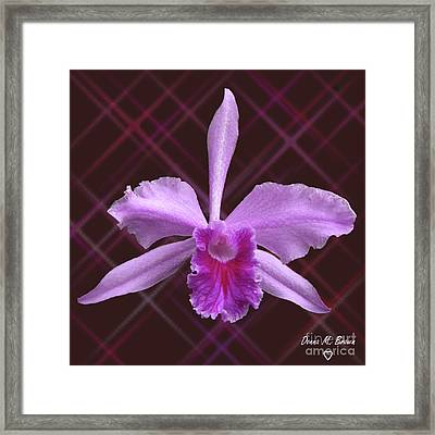 Framed Print featuring the photograph Beautiful Floating Orchid by Donna Brown