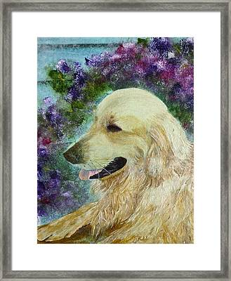 Framed Print featuring the painting Beautiful Golden by Claire Bull