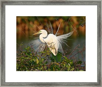 Beautiful Great White Egret At Dusk Framed Print by Sabrina L Ryan