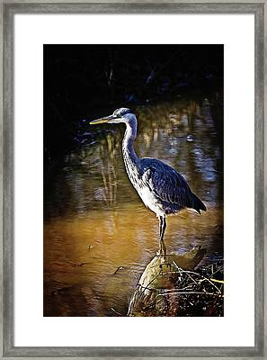 Beautiful Heron Standing In The Water Framed Print by Fotografie Jeronimo