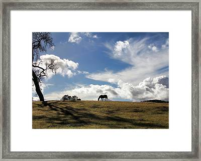 Beautiful Horse And Meadow Framed Print by Stephanie Laird