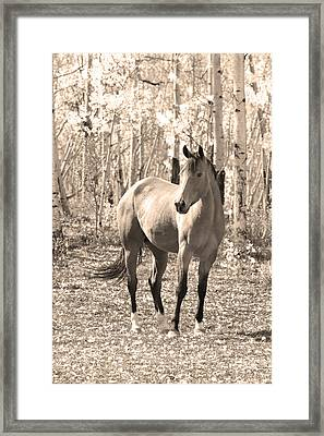 Beautiful Horse In Sepia Framed Print by James BO  Insogna