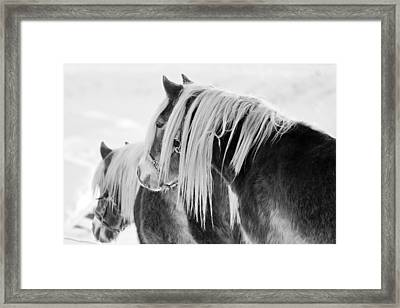 Beautiful Horse Framed Print by Martin Rochefort
