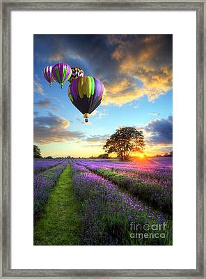 Beautiful Image Of Stunning Sunset With Atmospheric Clouds And Sky Over Vibrant Ripe Lavender Fields Framed Print by Caio Caldas