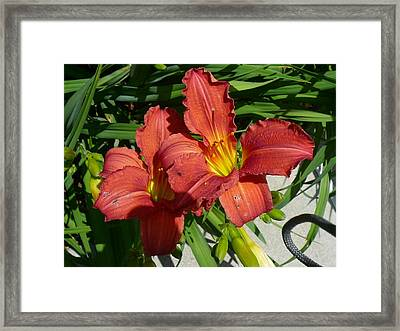 Beautiful Imperfections Framed Print by Connie Young