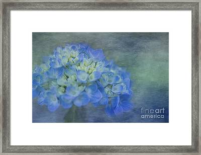 Beautiful In Blue Framed Print