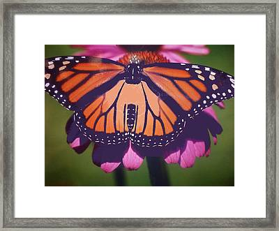 Beautiful In Orange Framed Print by Patricia Fragola