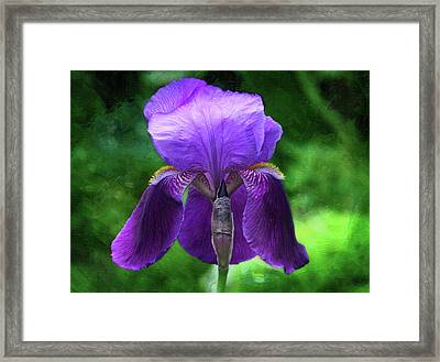 Beautiful Iris With Texture Framed Print by Trina Ansel