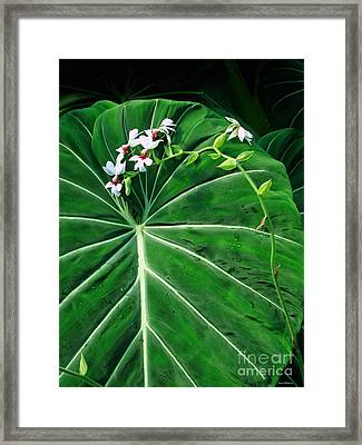 Beautiful Ivory Veins Of A Philodendron Framed Print by Sue Melvin