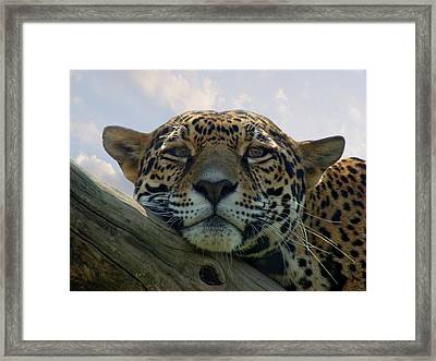 Beautiful Jaguar Framed Print