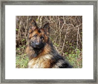 Framed Print featuring the photograph Beautiful Jessy by Sandy Keeton
