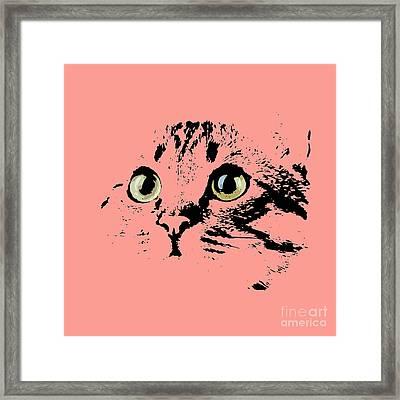 Beautiful Kitten Portrait Framed Print by Pablo Franchi
