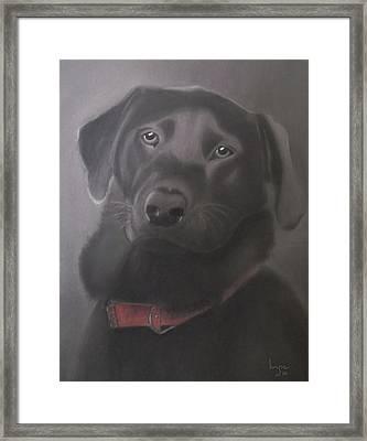 Beautiful Labrador Retriever Framed Print