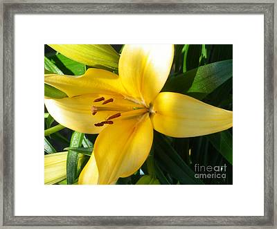 Beautiful Lily I Framed Print