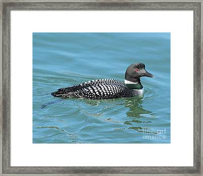 Beautiful Loon Framed Print