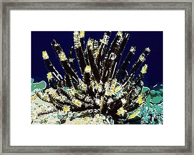 Beautiful Marine Plants 10 Framed Print by Lanjee Chee