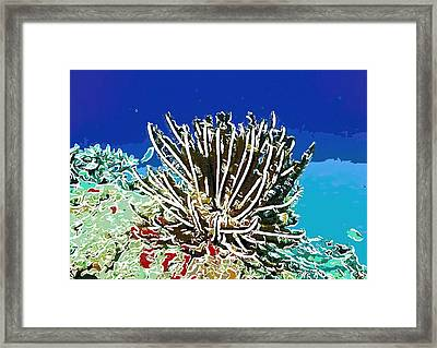 Beautiful Marine Plants 11 Framed Print by Lanjee Chee
