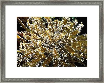 Beautiful Marine Plants 12 Framed Print by Lanjee Chee
