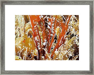 Beautiful Marine Plants 8 Framed Print by Lanjee Chee