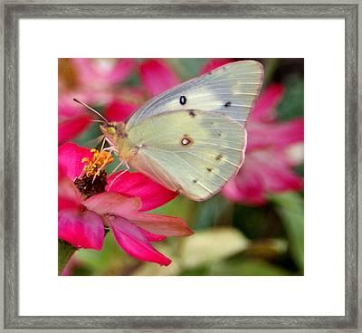 Beautiful Moth Framed Print