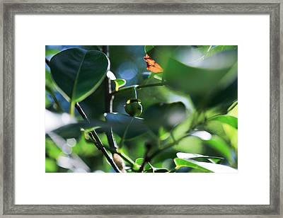 Beautiful Nature Framed Print
