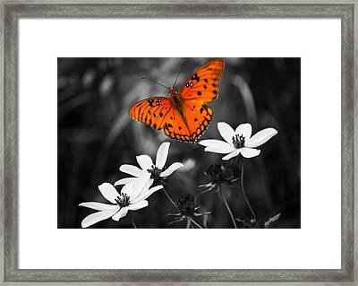 Beautiful Oranges Framed Print by Parker Cunningham