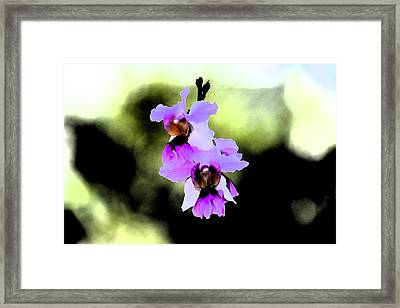 Beautiful Orchid Framed Print by Nanette Hert