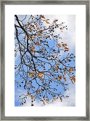 Decorative Tree Branch Framed Print by Christina Rollo
