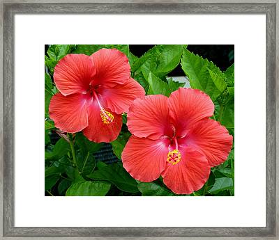 Beautiful Pair Framed Print by Jeanette Oberholtzer