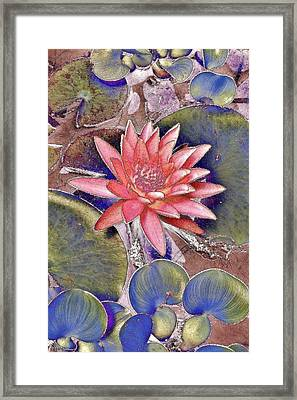 Beautiful Pink Lotus Abstract Framed Print