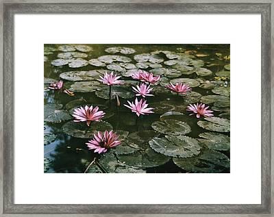 Beautiful Pink Lotus Water Lilies Bloom Framed Print by W. Robert Moore