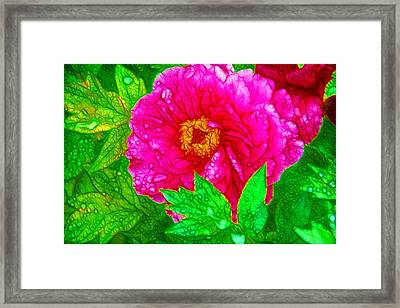 Beautiful Pink Peony Flower 1 Framed Print by Lanjee Chee
