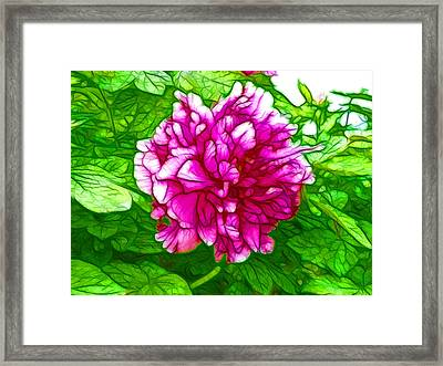 Beautiful Pink Peony Flower 2 Framed Print by Lanjee Chee