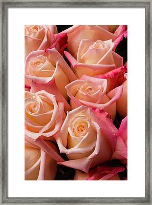 Beautiful Pink Roses Framed Print