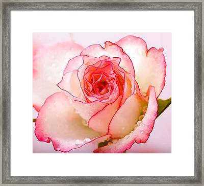 Beautiful Pink Roses Framed Print