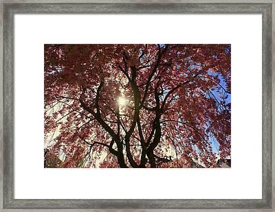 Beautiful Pink Tree Framed Print by Amanda Camarata