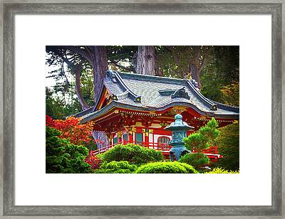 Beautiful Pogaha Golden Gate Park Framed Print by Garry Gay