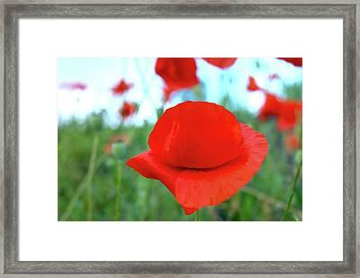 Beautiful Poppy Framed Print