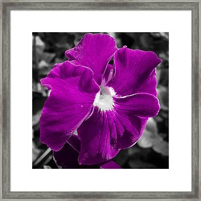 Beautiful Purple Framed Print