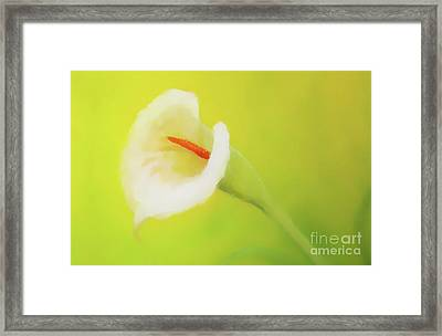 Beautiful Radiant Cala Flower On Decorative Background, Graphic From Painting. Framed Print by Jozef Klopacka