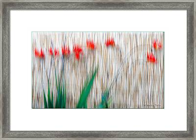 Beautiful Red Framed Print