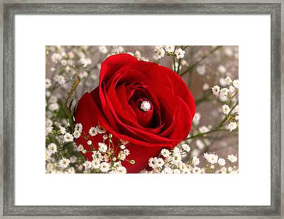 Beautiful Red Rose With Diamond Framed Print by Tracie Kaska