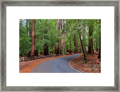 Beautiful Redwood Grove Framed Print