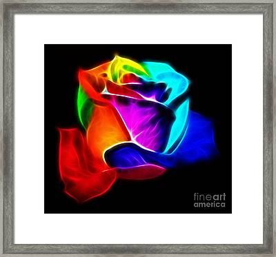 Beautiful Rose Of Colors Framed Print
