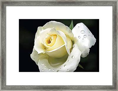 Beautiful  Roses 1 Framed Print by Lanjee Chee