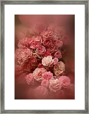 Beautiful Roses 2016 Framed Print