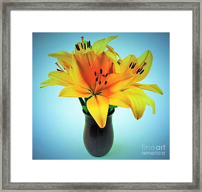 Framed Print featuring the photograph Beautiful Royal Lilies  by Ray Shrewsberry